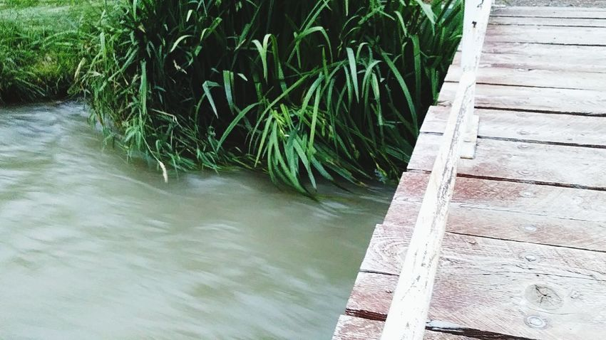By the Dock Water High Angle View Outdoors Day Nature No People Plant Grass Growth Beauty In Nature Lush - Description Personal Perspective Water_collection Flood Man Made Structure Wood - Material Textured  Rural Scene Bridge - Man Made Structure Bridge Over Water