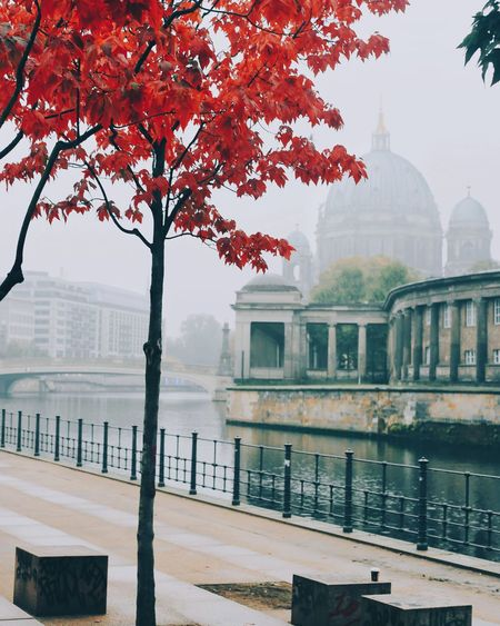 EyeEm Selects Tree City Travel Destinations Water Reflection Outdoors Autumn Architecture No People Day Branch Sky Cityscape Nature Politics And Government Capture The Moment Autumn Leaves Autumn Eyemphotography Beauty In Nature Red Berlin Berliner Ansichten EyeEmBestPics