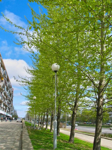 Cityscape Sidewalk Sky And Clouds Beauty In Nature Branch Day Grass Green Color Growth Nature No People Outdoors Pavement Springtime Streetlights Tree Young Leaves