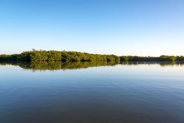 Landscape of mangroves and calm water near Rio Lagartos, Mexico Calm Central Mexico Morning Nature Yúcatan America Early Flora Landscape Mangrove Mexican Outdoors Reflection Rio Lagartos River Scenics Sea Tourism Town Tranquility Tree Water Yucatan Mexico Yucatan Peninsula