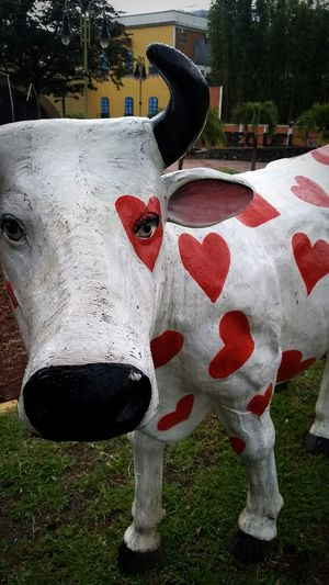 Love Cow Colors Color