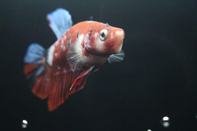 Betta fish aquascape