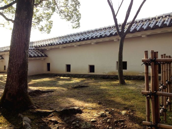 Japan Traditional Architecture Built Structure Architecture Building Exterior Tree Outdoors EyeEmNewHere