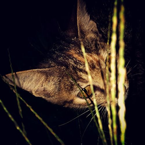 Dark Flash Cat Evil Eye First Eyeem Photo