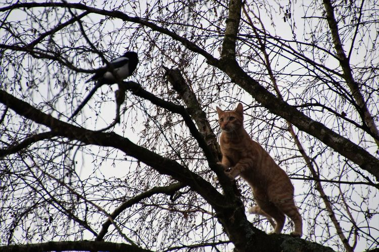 Animals In The Wild Tree Bird Sky Cat Lovers Cats Of EyeEm Animal Themes Animal Wildlife Branch One Animal Low Angle View Perching No People Outdoors Nature Mammal Day Bare Tree Beauty In Nature The Great Outdoors - 2017 EyeEm Awards EyEmselect