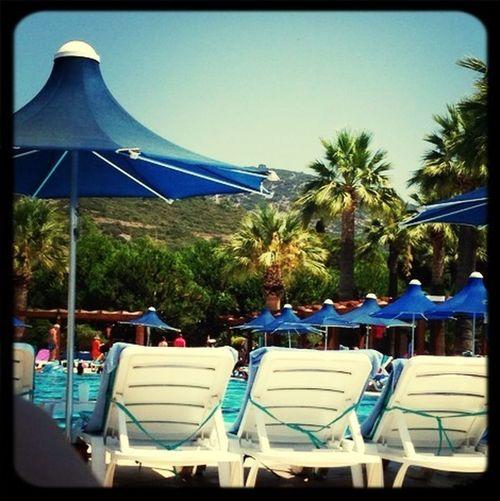 Enjoying Life Sunlight Swimming Pool Taking Photos