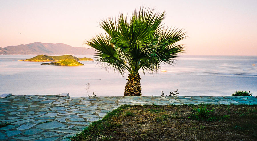 Alone palm tree seen from patio and behind the sea at sunset hour with nice colors. Greece Horizon Over Water Idyllic Lifestyles Mountain No People Ocean Outdoors Palm Palm Tree Palm Tree Scenic Scenics Sea Seascape Sky Tourism Tranquil Scene Tranquility Travel Travel Destinations Vacations Water