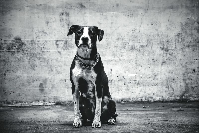 Dog in front of wall