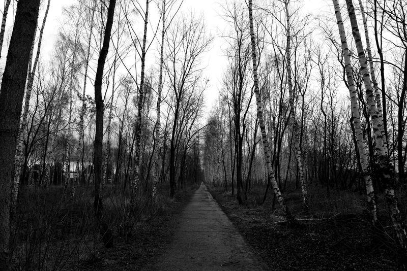 Berlin Birken Black & White Blackandwhite Low Angle View Mauerstreifen Mauerweg Nature Outdoor Photography Outdoors Sky Tree Trees Trees And Sky