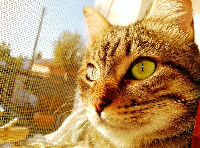 Lapi Cats Eyecatseries Gats :)) Gatos Catoftheday Cat Lovers Cats 🐱 Cats Of EyeEm Gatto😸