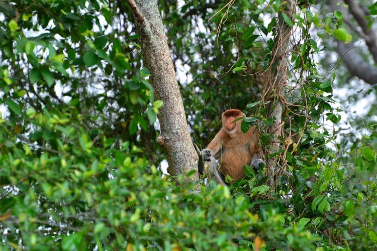 In the forest Tree Leopard Branch Safari Animals Climbing Forest Bird Green Color Tropical Rainforest Rainforest Primate Tree Canopy  Monkey
