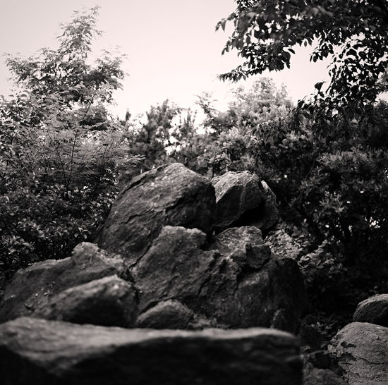 Rocks in forest against clear sky