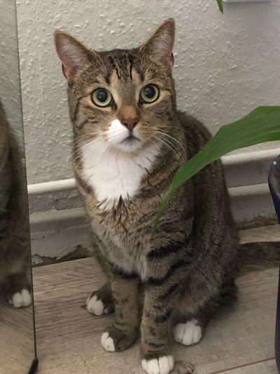 CAT Katze