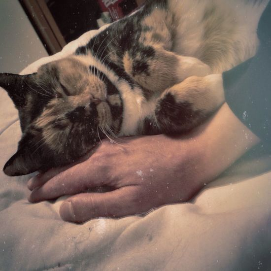 This is what humanz are good for. Cat Cats Calico Cat♡