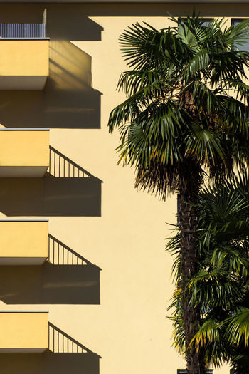 The Architect - 2018 EyeEm Awards Apartment Architecture Building Building Exterior Built Structure City Day Growth Low Angle View Nature No People Outdoors Palm Leaf Palm Tree Plant Railing Residential District Sky Staircase Steps And Staircases Tree Tropical Climate #urbanana: The Urban Playground