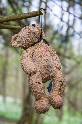 Teddy Bear hanging from a tree branch in a forest Sadness Sad WoodLand Teddybear Playing Play Stuffed Toy Close-up No People Day Focus On Foreground Twig Closeup Symbol Old Woods Outdoors Cute Brown Forest Nature Soft Love Branch Toy Tree Hanging Bear Teddy Teddy Bear love yourself Love Me