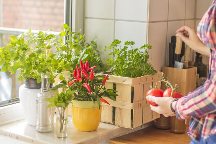 Midsection of woman holding tomatoes by potted plants at home