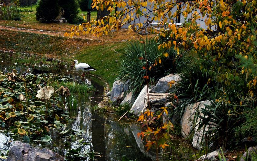 Autumn Nature The Birds Colours Of Autumn