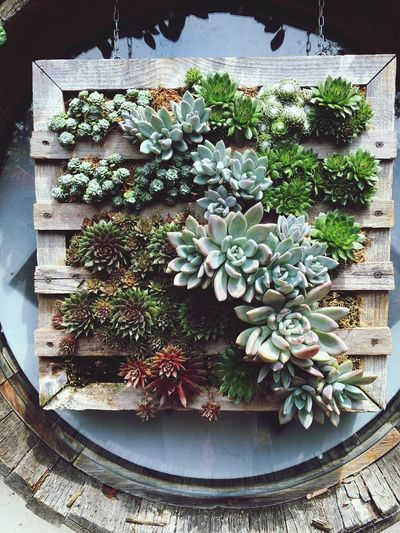 Wall Garden. Wall Garden Cactus Garden Cactus On A Wall Pretty Cactus Cactus Photography Botanical Garden Succulent Succulents Succulent Plant Succulent Garden Succulent Photography Succulent Photo Succulent Display Cactus Display