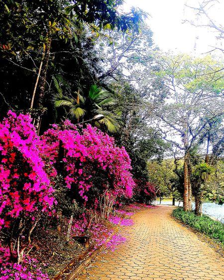 Nature Natureza ☀⭐🍂🍀🌹😍❤ Primavera2016 Dialindo 🌴🌵