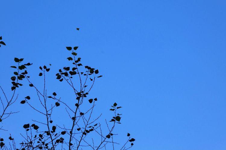 Sky Clear Sky