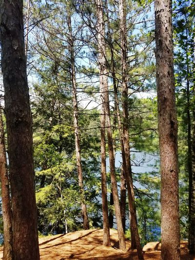 Wisconsin Mirror Lake Echo Rock View Lake Trees Tree Forest Tree Trunk Branch Sky Close-up Green Color Woods WoodLand Pathway Pine Woodland Pine Tree Treelined Growing Greenery Lush - Description