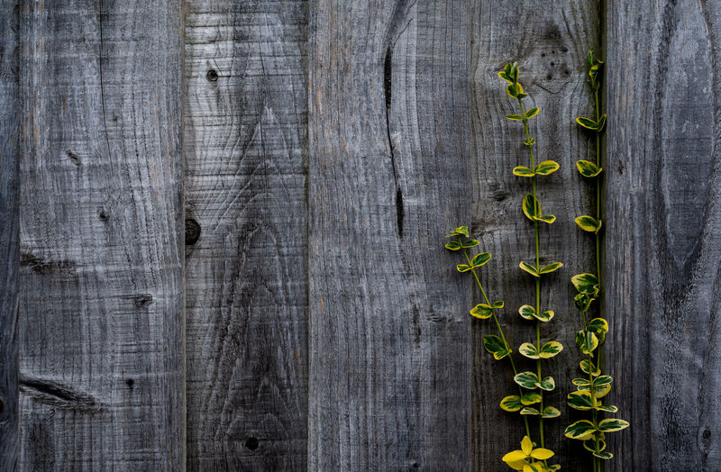 Full frame shot of plants growing on wooden plank