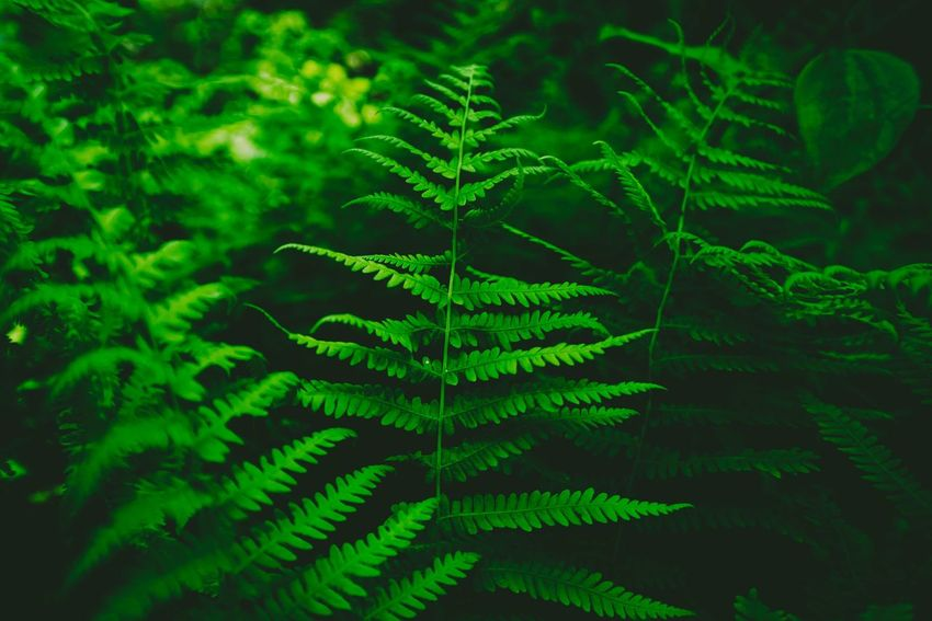 Smoky Mountains -focused on the small things. Nikon Nikonphotography Nikonphotographer Nikond750 D750 Macro Hiking Travel Adventure Hike Folk Nikon_photography_ Outdoors Close-up Nature Beauty In Nature Forest EyeEmNewHere