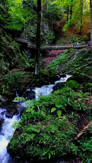 Water Wood Austria Woodwalking Woodbridge