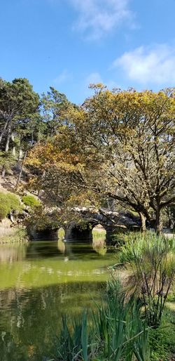 Bridge at Stowe lake Blue Sky And Clouds Sunny Day Greenery Branches Plants Bridge - Man Made Structure Nature_collection No Filter Purist No Edit No Filter Pathway Rock Nature Flower Golf Course Springtime Tranquil Scene Scenics Idyllic Calm Tranquility