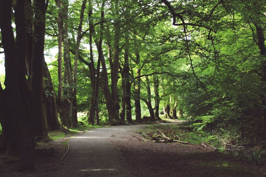 Forest Nature Road Tree The Way Forward Tranquility Landscape Day Beauty In Nature No People Outdoors