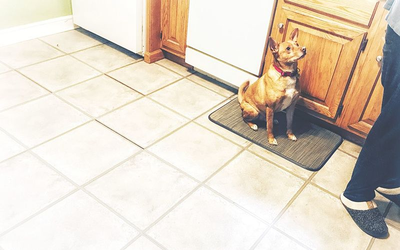 Watching Craig make dinner... Dinnertime Dog❤ Dogs Dog Dogs Of EyeEm EyeEm Selects High Angle View Flooring Sunlight Day Tile Architecture Tiled Floor Footpath No People Shadow Outdoors Sidewalk Paving Stone Built Structure Nature Lifestyles