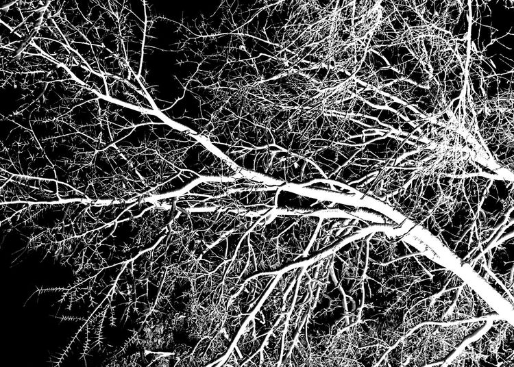 White and black image of bare tree limbs in Richmond, Virginia 2catswithcameras Black Background EyeEm Gallery Silhouette Bare Tree Branch No People Pjpink Reverse Image Tree White And Black White Tree Winter