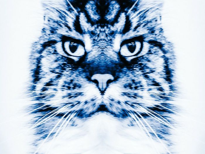 Double Max Max The Maine Coon Cats Cats Of EyeEm Cats' Eyes Cats' CollectionPets Mobile Photography Art Fineart Simmetry Sharp Contrast