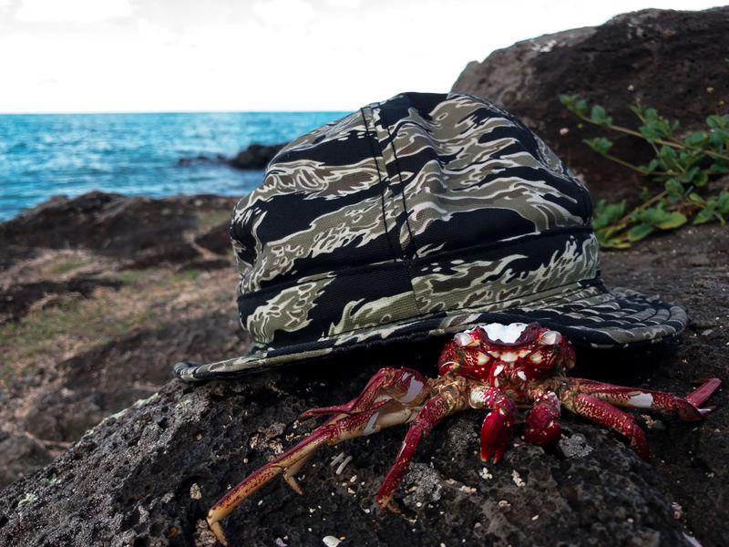 Animals In The Wild Beach Close-up Crab Crustacean Day Funny Hat Horizon Over Water Island Nature No People One Animal Outdoors Red Rock - Object Sand Scenics Sea Sea Life Sky Tropical Climate Water