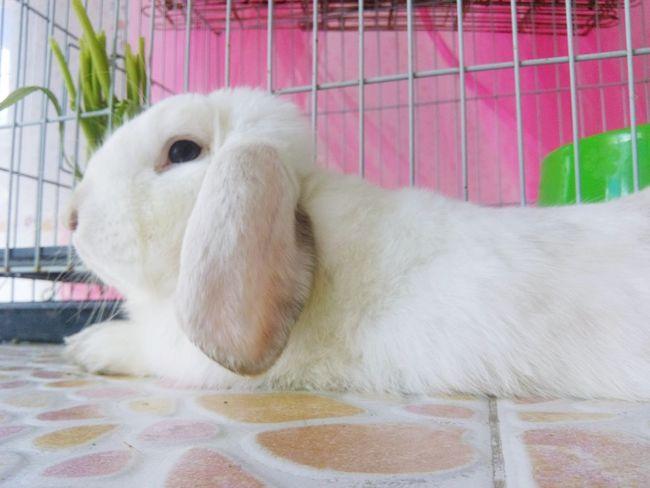 Bunnys Bunnylove Rabbit Rabbitsofinstagram Rabbits Hello World EyeEm Best Shots Capture The Moment