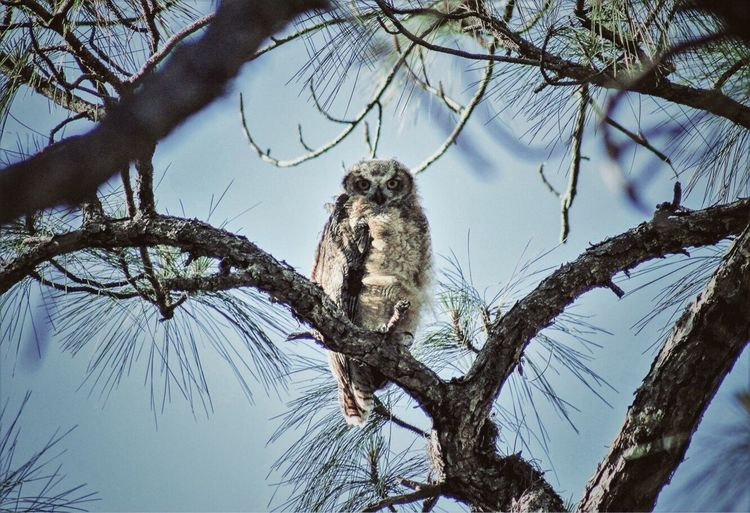 Low angle portrait of owl perching on branch against clear sky