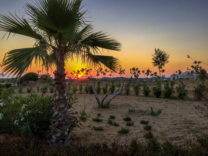 Sunset Side Nature No People Palm Tree Sky Sunset Tree
