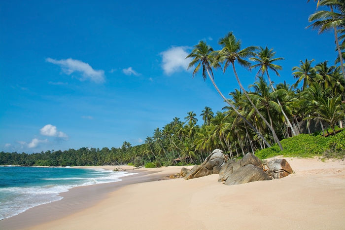 Paradise beach with green turquoise waves, coconut palm trees and fine untouched sand, Southern Province, Sri Lanka, Asia. Coconut Palms Green Pristine Sri Lanka Sunny Beach Beauty In Nature Blue Cloud - Sky Day Growth Nature No People Outdoors Palm Tree Paradise Sand Sandy Scenics Sea Sky Tranquil Scene Tranquility Tree Tropical Turquoise Water Waves