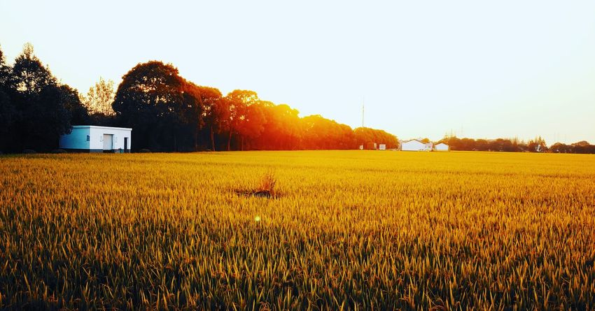 Rest at sunset. Countryside Plowed Field Green