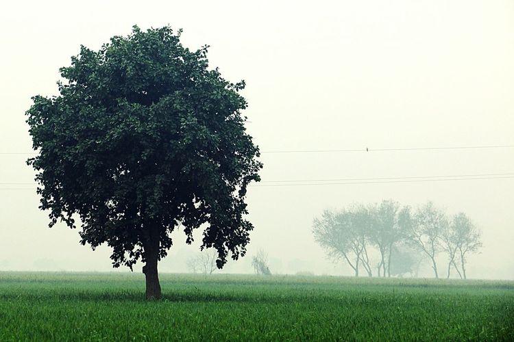 Countryside Hdrphotography Delhite Rookiephotographer Canon 70d :)