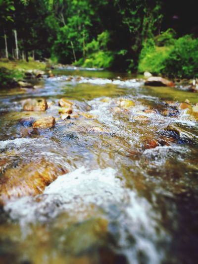 Surface level of stream flowing in forest