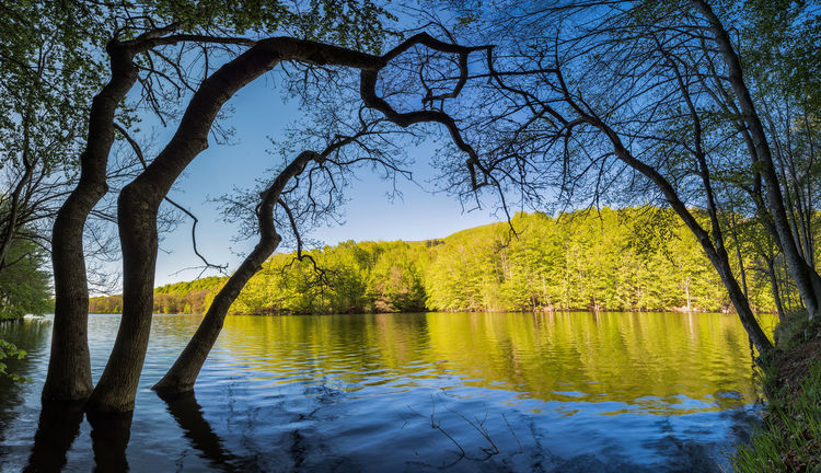 Panoramic Beauty In Nature Branch Change Day Green Color Growth Lake Landscape Nature No People Non-urban Scene Outdoors Plant Reflection Scenics - Nature Sky Tranquil Scene Tranquility Tree Tree Trunk Trunk Water
