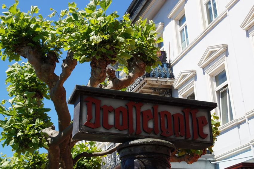 Low Angle View Tree Text Day Outdoors Architecture Building Exterior No People Sky Built Structure Sign Drosselgasse Rüdesheim Am Rhein Germany