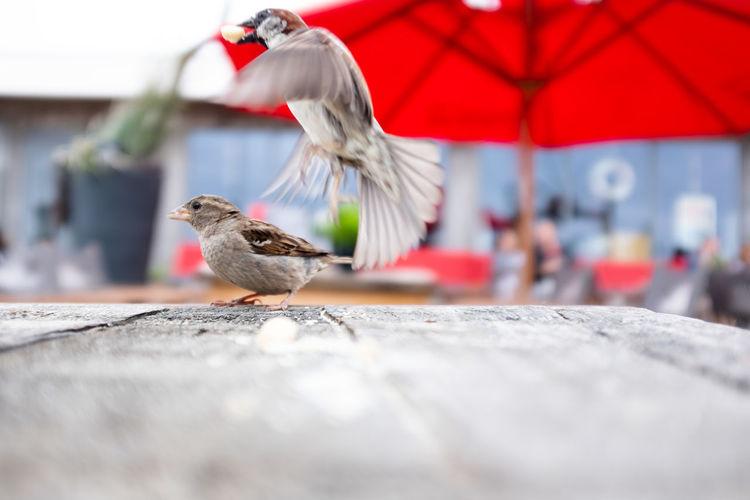Animal Wildlife Bird Day No People Outdoors Selective Focus Vertebrate