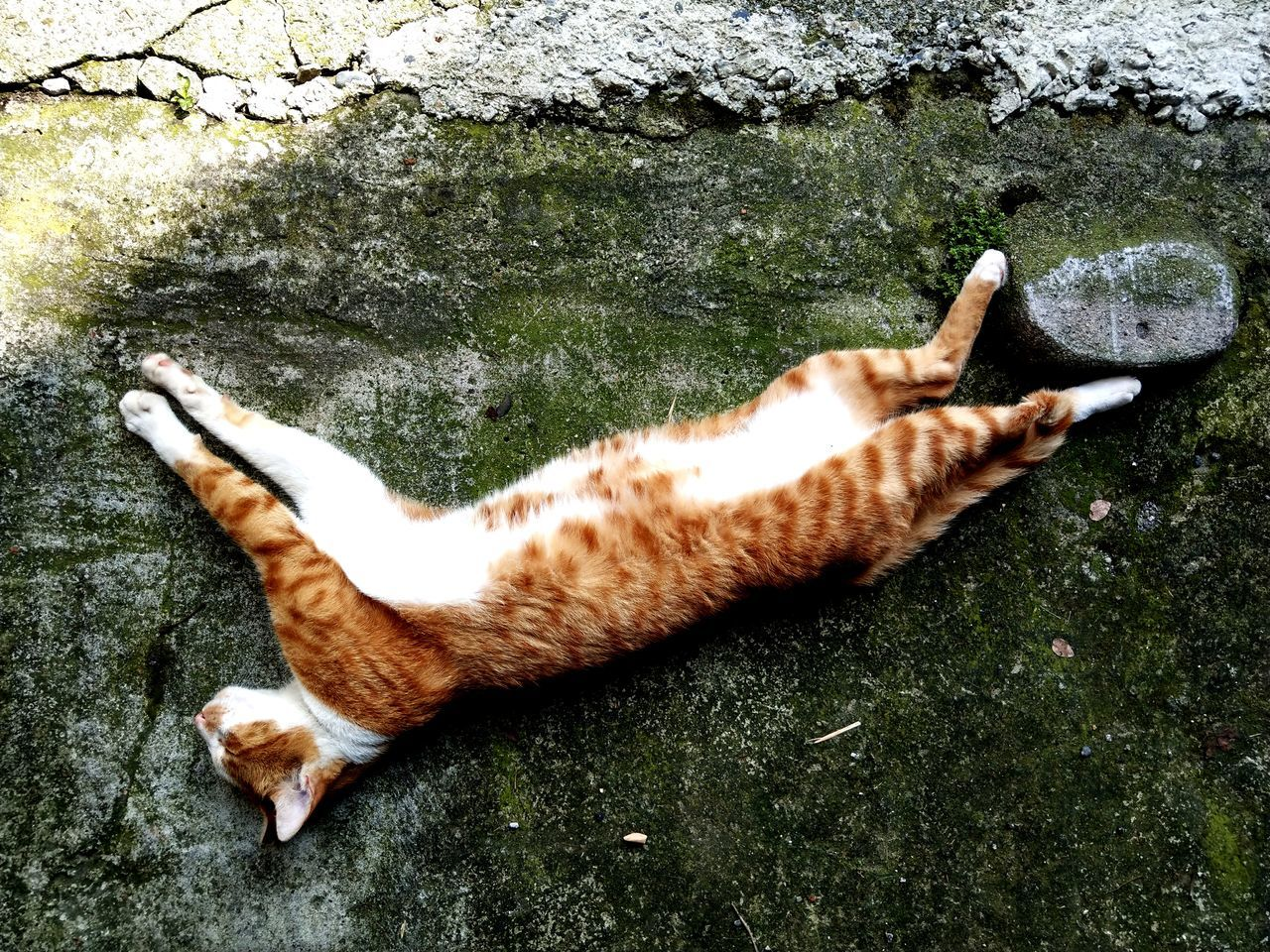 High Angle View Of Ginger Cat Lying On Concrete Footpath