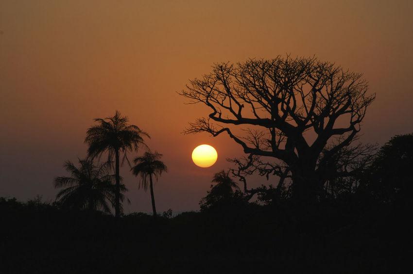 Niafrang Senegal Niafarang Niafourang Niafrang Palm Tree West Africa Baobab Baobab Tree Beauty In Nature Casamance Nature Orange Color Outdoors Palm Trees Scenics Senegal Silhouette Sun Sunset Tranquil Scene Tranquility Tree