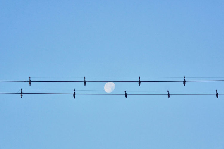 Moon trough two cable lines like a music note Architectural Feature Architecture Architecture_collection Beauty In Nature Blue Cable Clear Sky Copy Space Low Angle View Migrating Nature No People Outdoors Pattern Sky The Architect - 2017 EyeEm Awards