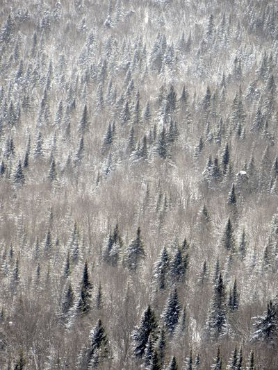 A forest. Charlevoix It's Cold Outside No Edit/no Filter No People Quebec Sentier Des Caps De Charlevoix Snow The Purist (no Edit, No Filter) The Traveler - 2018 EyeEm Awards