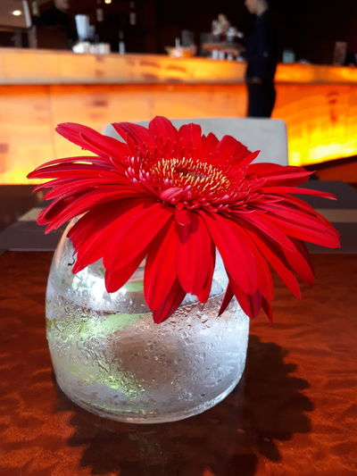 Red flower Red Flower Petal Drink Close-up No People Freshness Indoors  Refreshment Flower Head Water Fragility Day Nature Flower Collection Red Flower At Its Best Red Flower Flower Table Stilllife Flowerlovers Beauty Flower *.* Red Red Leaves Red Color RedFlower Elegant